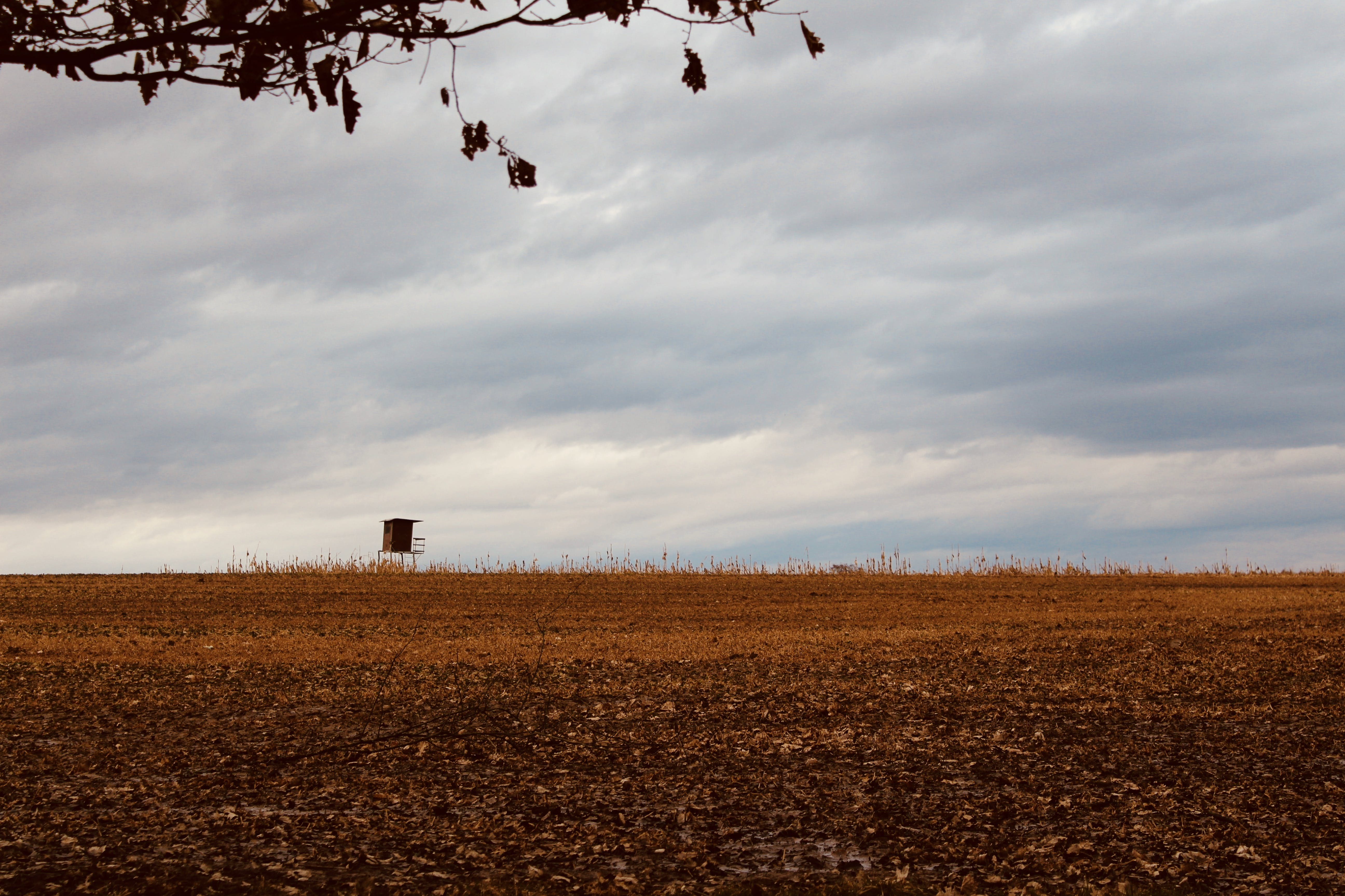 Free stock photo of field, lonely