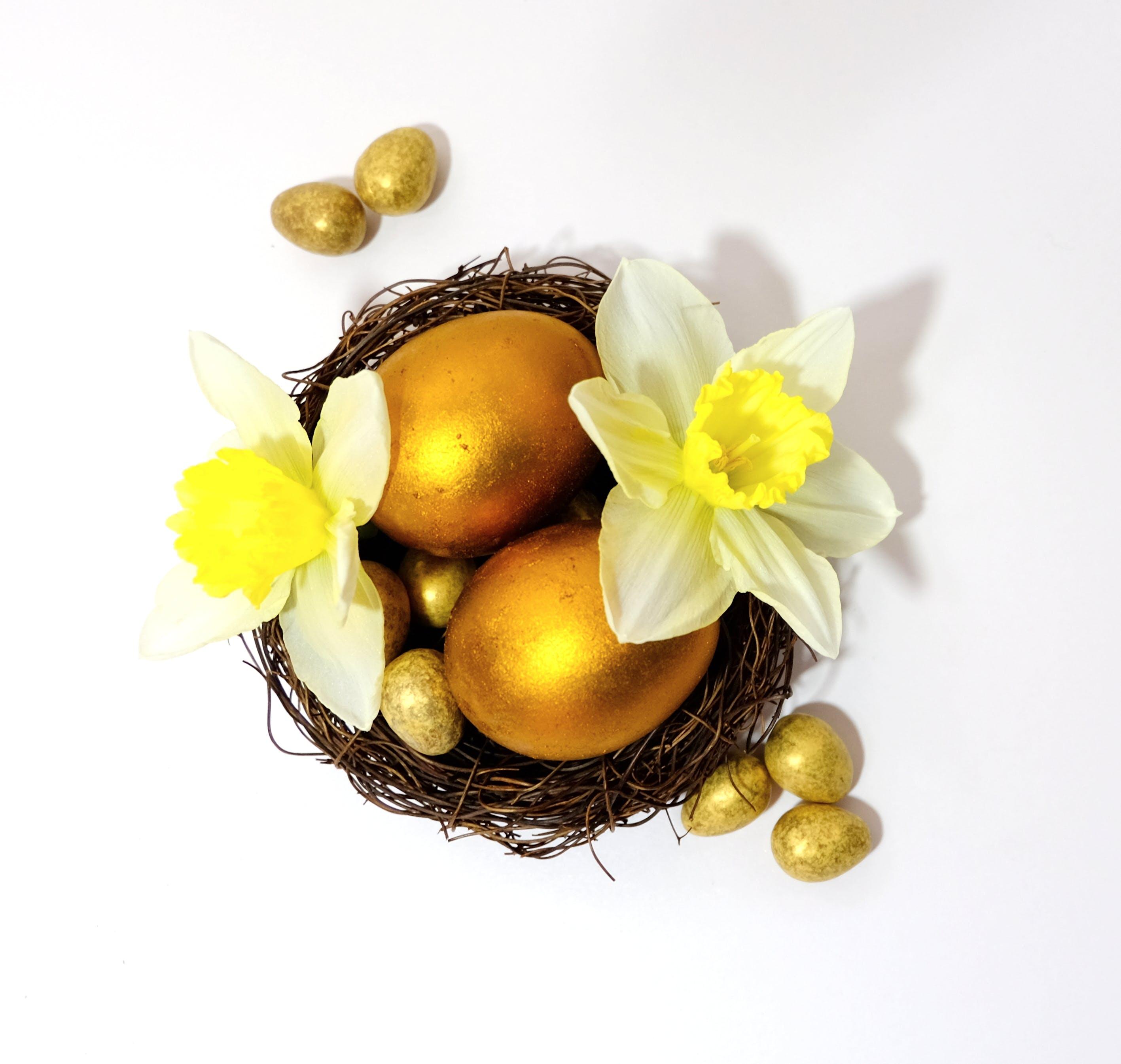Free stock photo of easter, egg, eggs, flower