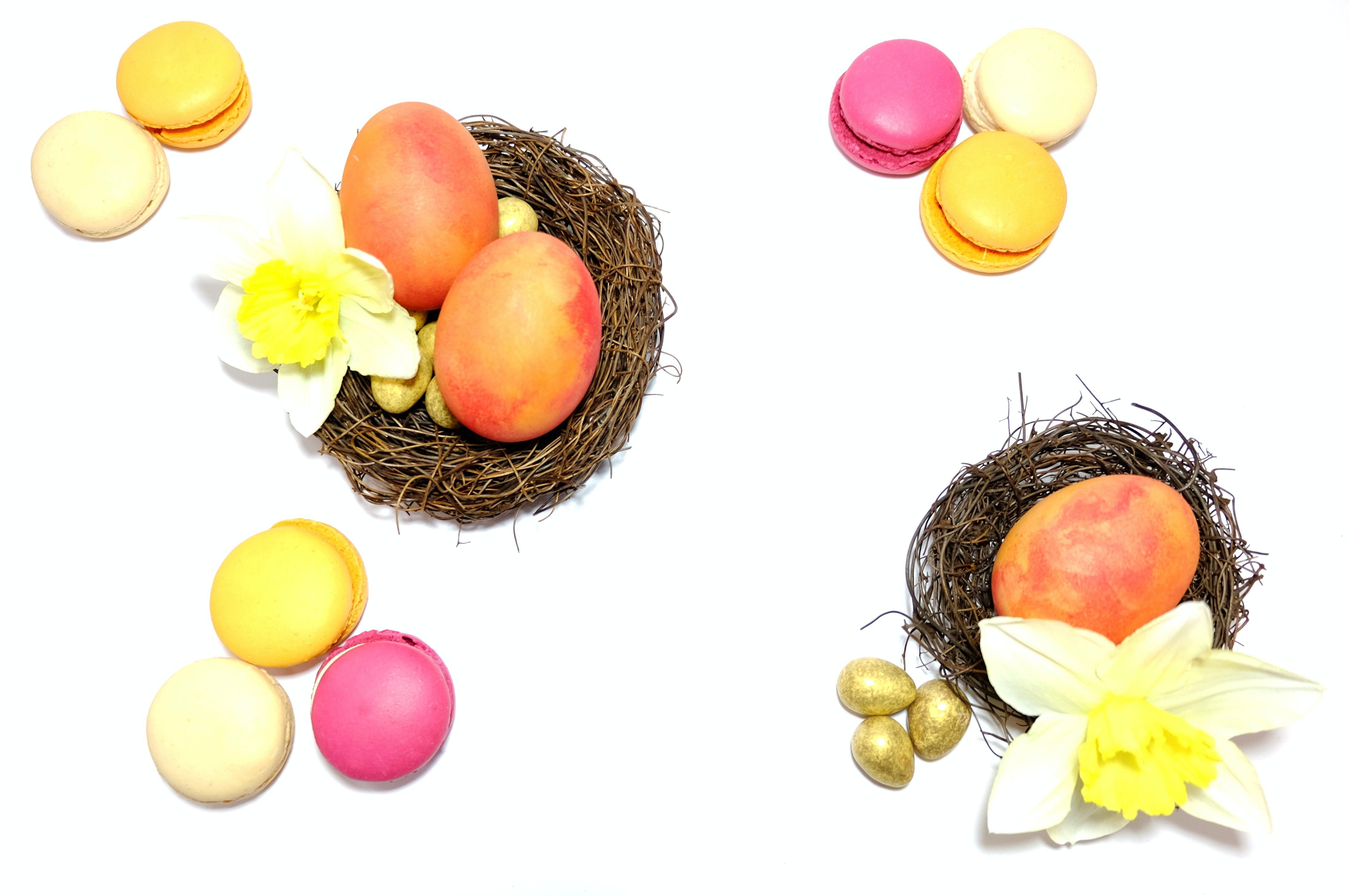 Free stock photo of easter, egg, flatlay, flower