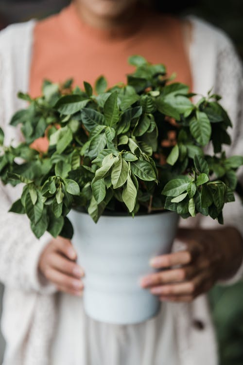 Person Holding Green Plant in White Ceramic Pot