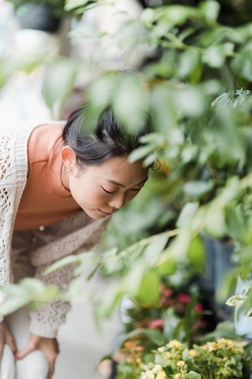 꽃, 내리막 길, 성장의 무료 스톡 사진