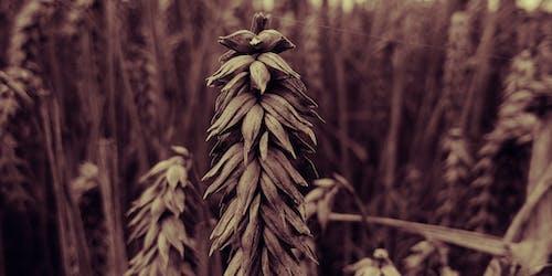 Бесплатное стоковое фото с дерево, еда, заводы, зерновые