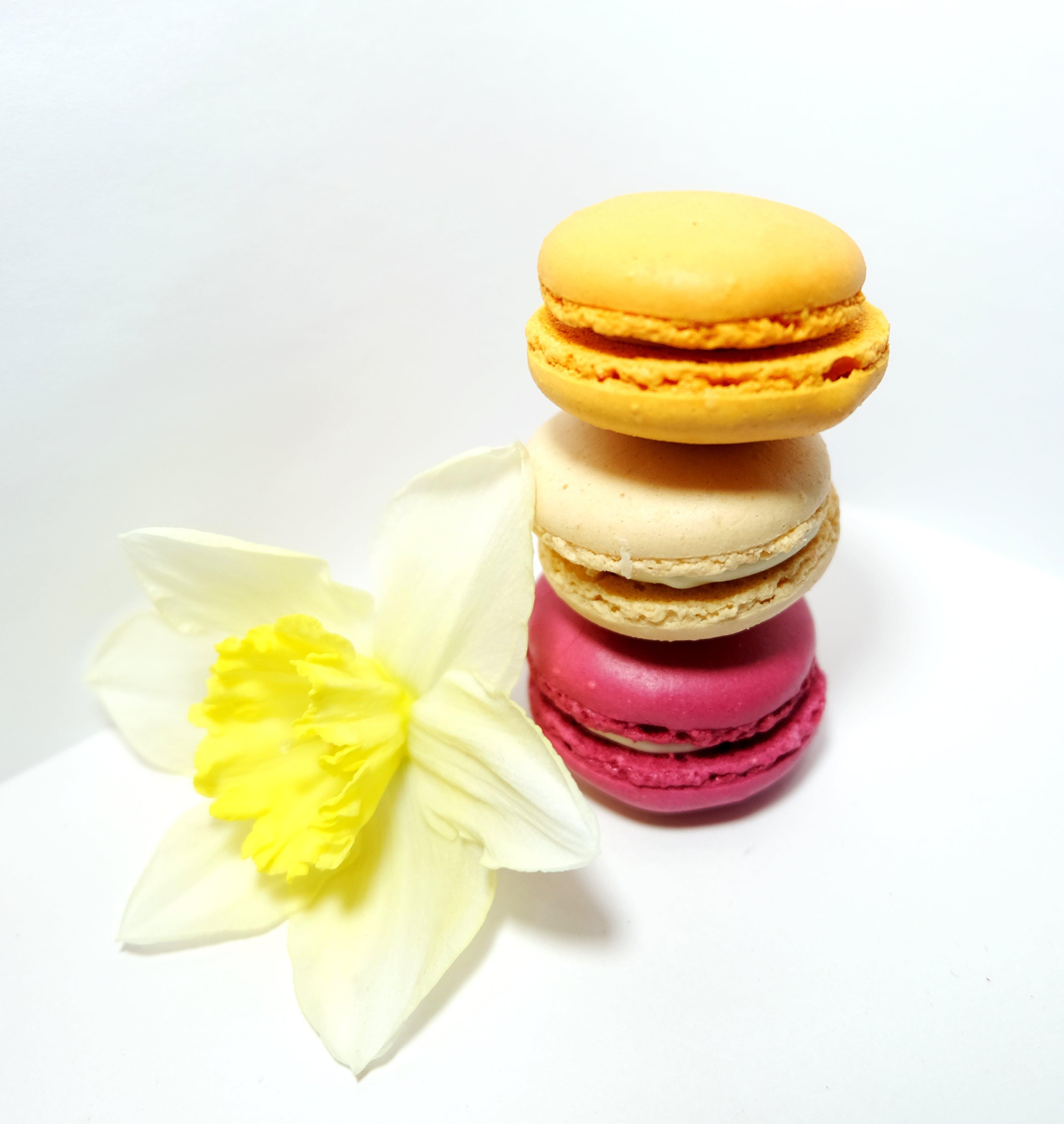 Free stock photo of cream, flower, macarons, macaroons