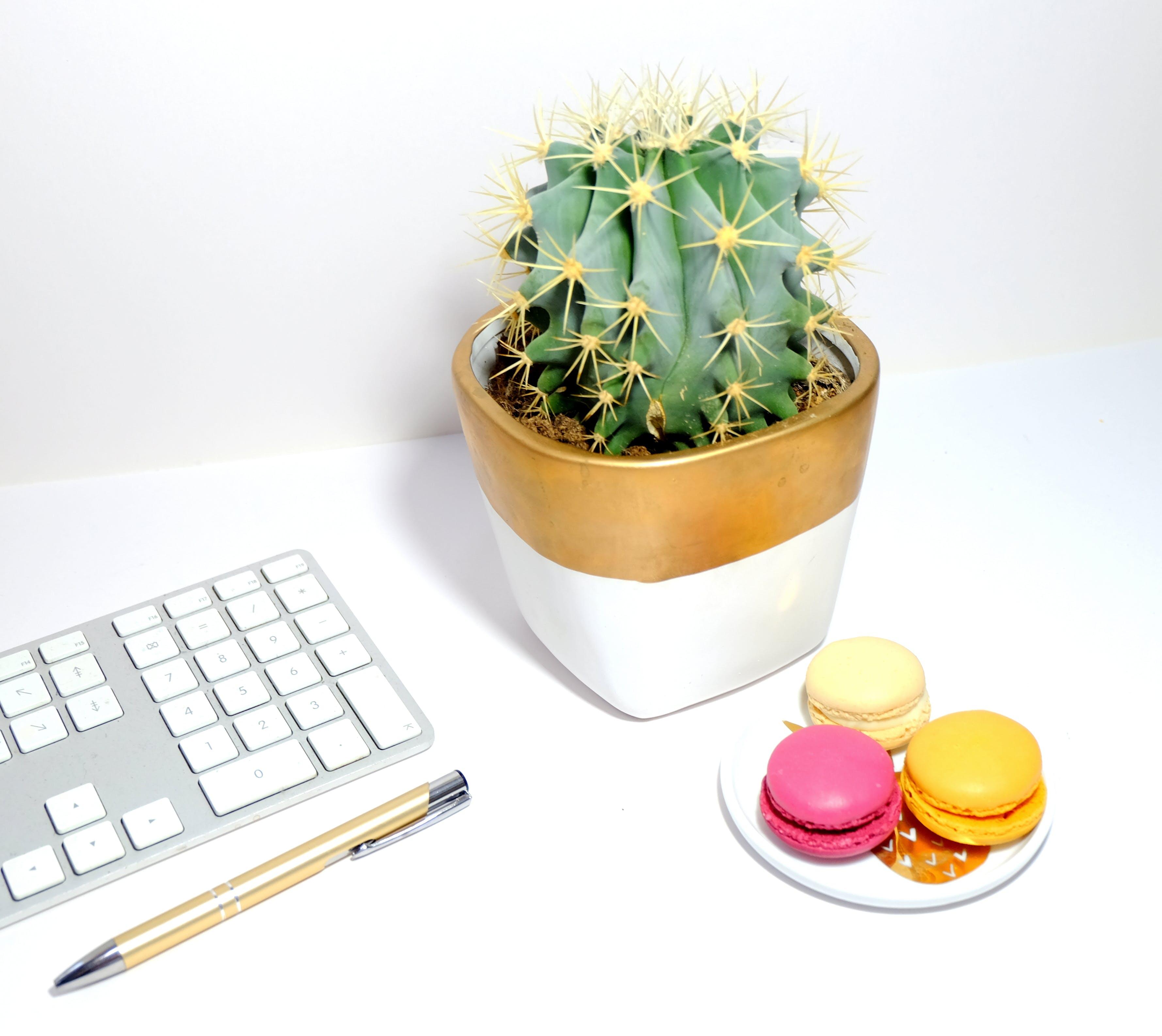 Бесплатное стоковое фото с горшечное растение, завод, кактус, клавиатура