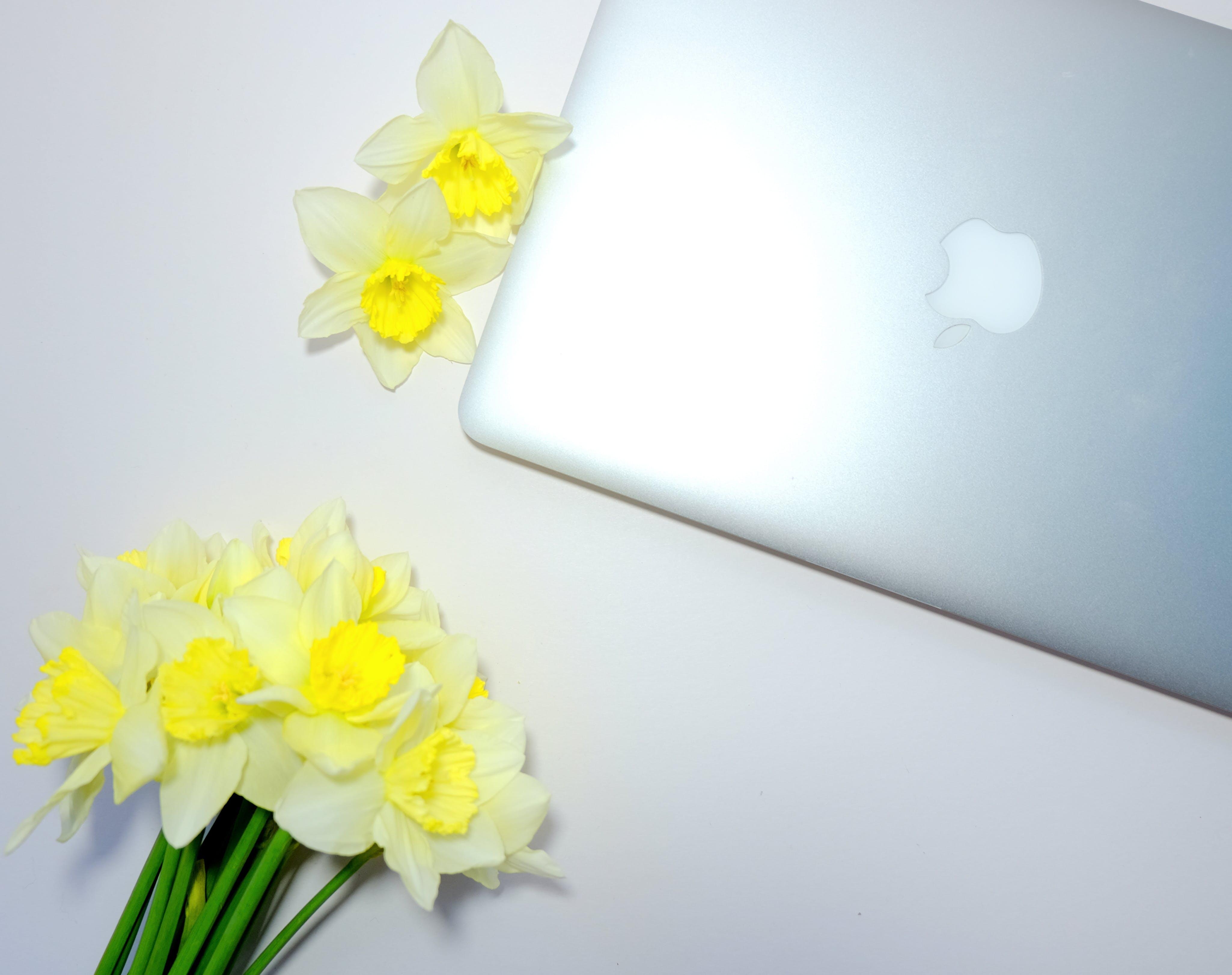 Kostenloses Stock Foto zu blumen, schreibtisch, laptop, macbook pro