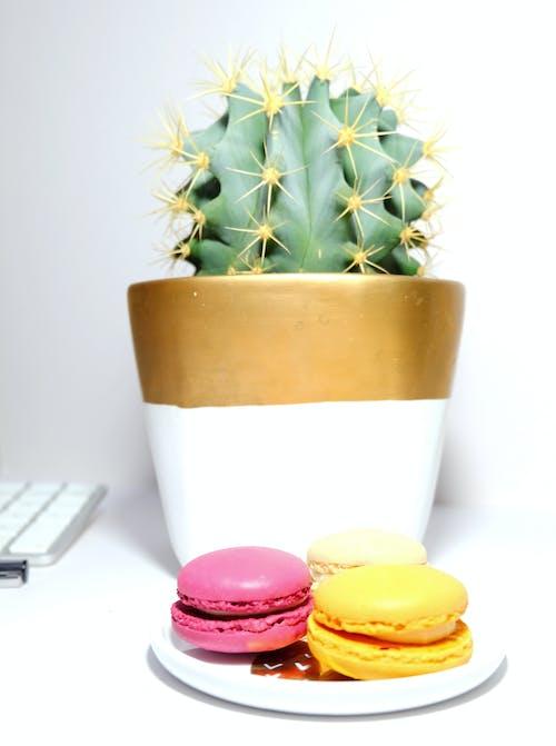 Free stock photo of bright, cacti, cactus, desk