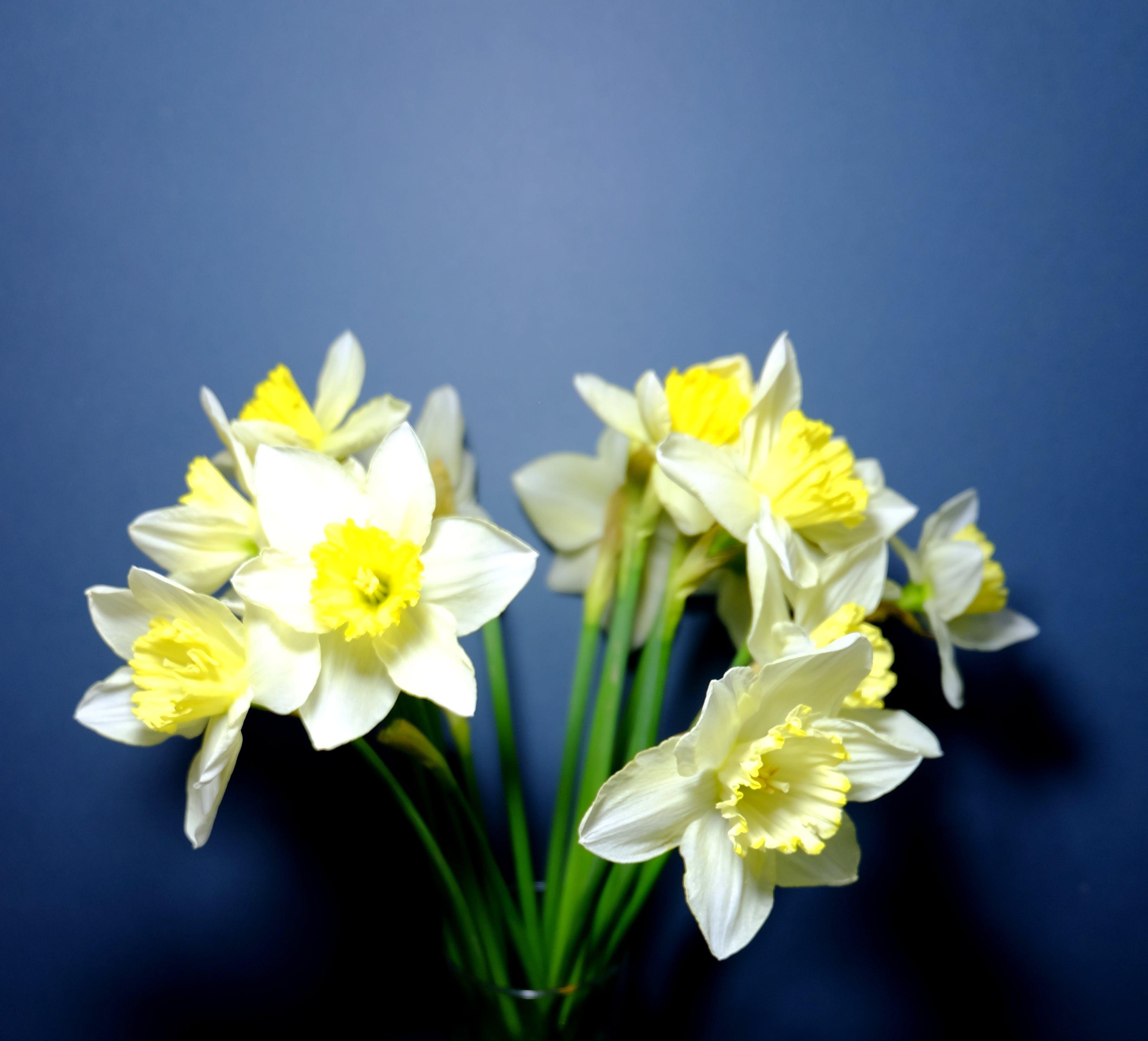 Kostenloses Stock Foto zu blumen, blau, gelb, frühling