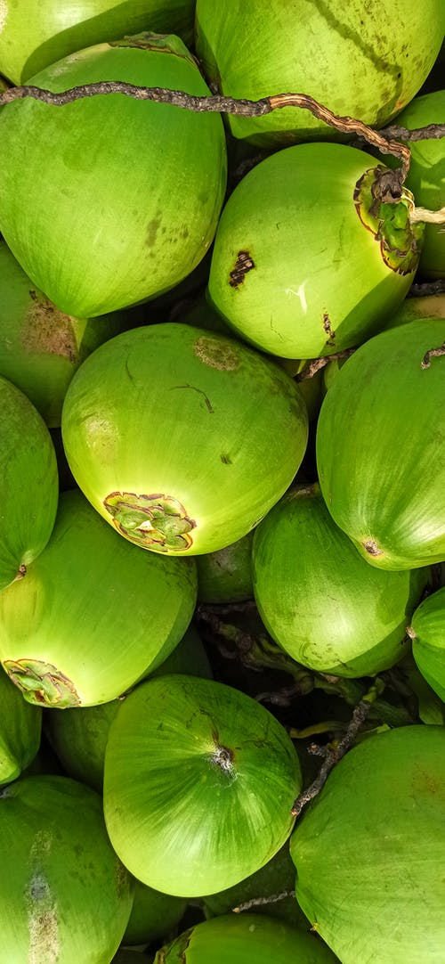 Free stock photo of coconuts, green color, natural beauty