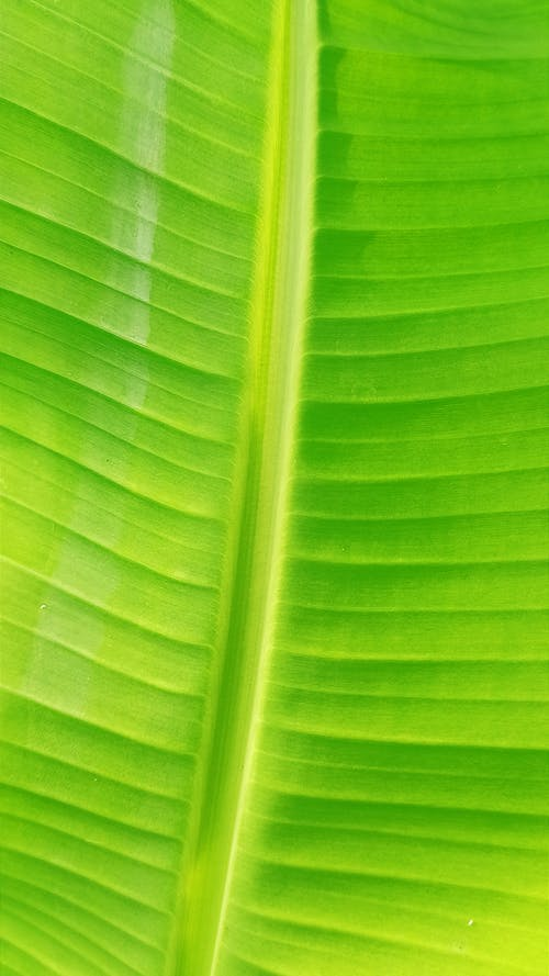Free stock photo of colorful background, leaf