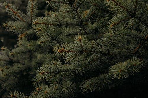 Безкоштовне стокове фото на тему «заводи, зелений, кольори, конус»