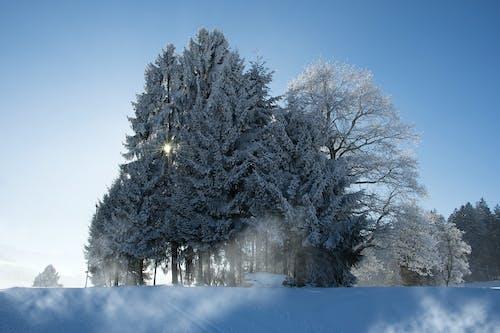 คลังภาพถ่ายฟรี ของ ดินแดนมหัศจรรย์แห่งฤดูหนาว, ท้องฟ้า, ท้องฟ้าสีคราม, ท้องฟ้าสีฟ้า