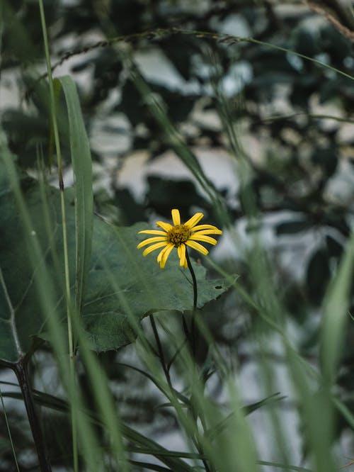 Free stock photo of flower, green, yellow