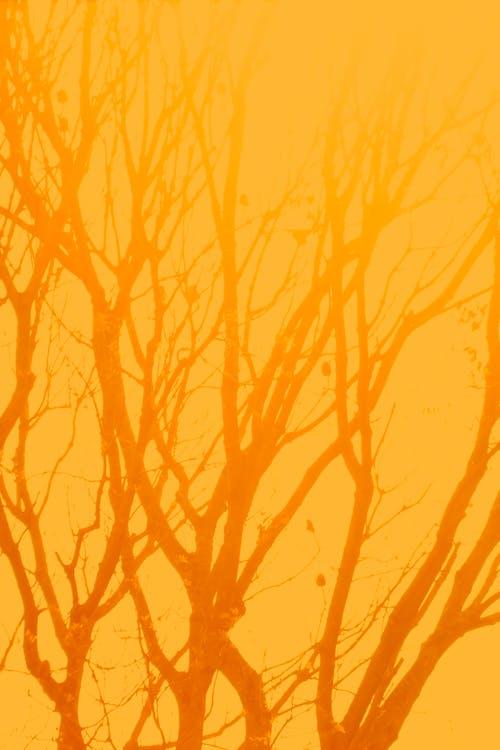 Foto stok gratis backlit, bayangan hitam, daun