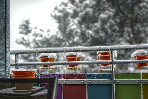 คลังภาพถ่ายฟรี ของ หิมะ