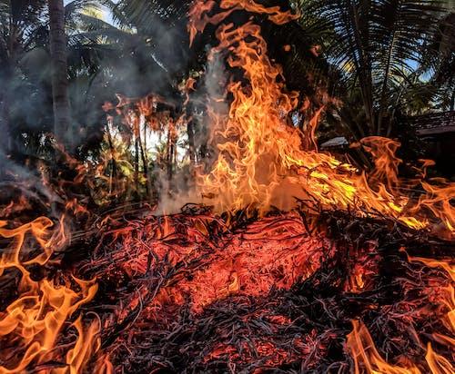 Ảnh lưu trữ miễn phí về cây, cháy, cháy rừng, gỗ