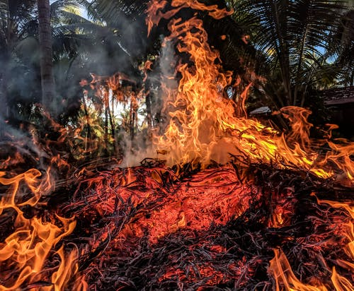 Kostenloses Stock Foto zu asche, bäume, brand, brennholz