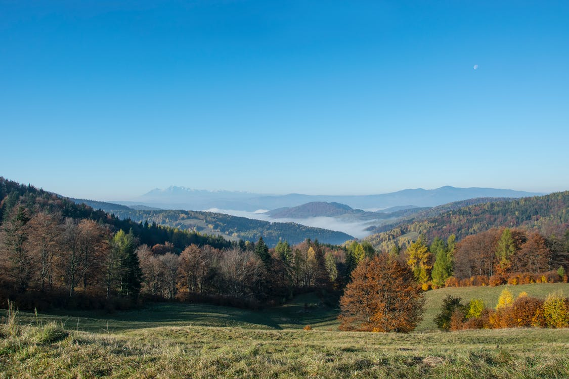 Grüner Baum Nahe Berggebiet Während Des Tages