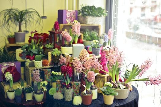 Free stock photo of plant, gift, window, flower