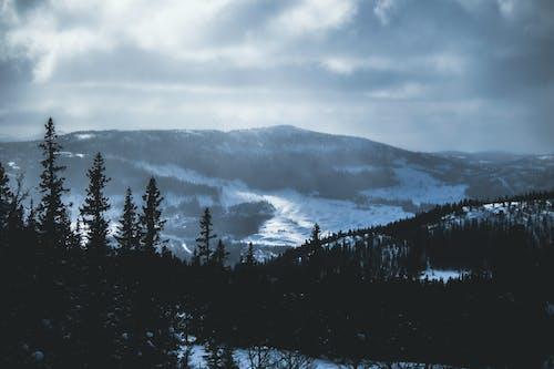 下雪的, 似雪, 冬季, 冰 的 免費圖庫相片