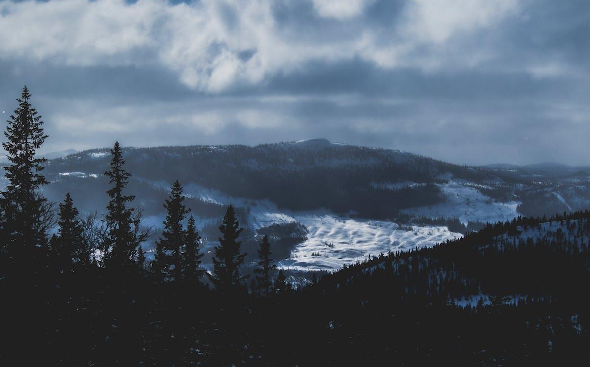 erdő, fák, felhők