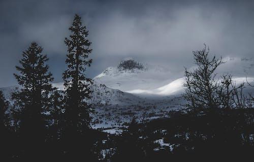 Безкоштовне стокове фото на тему «гірські вершини, гори, Денне світло, дерева»