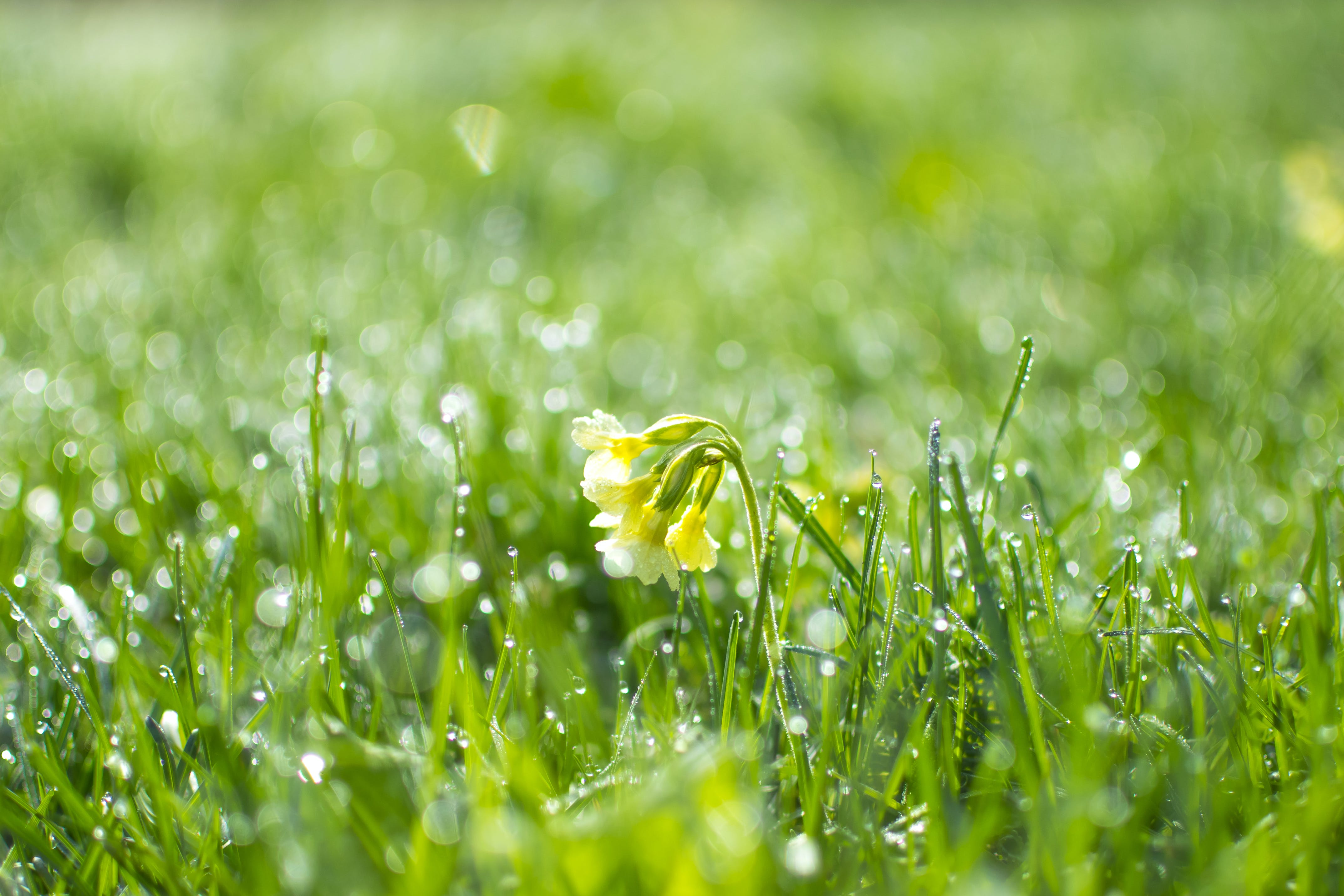 Green Grass at Daytime