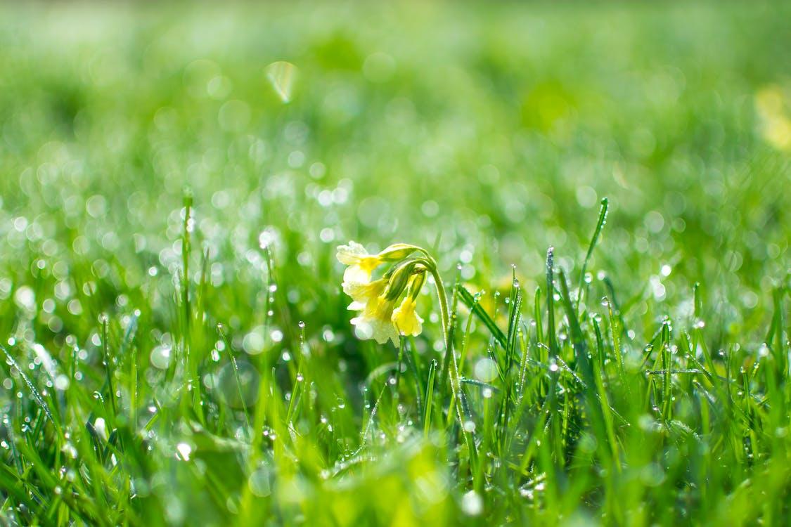 Hierba Verde Durante El Día