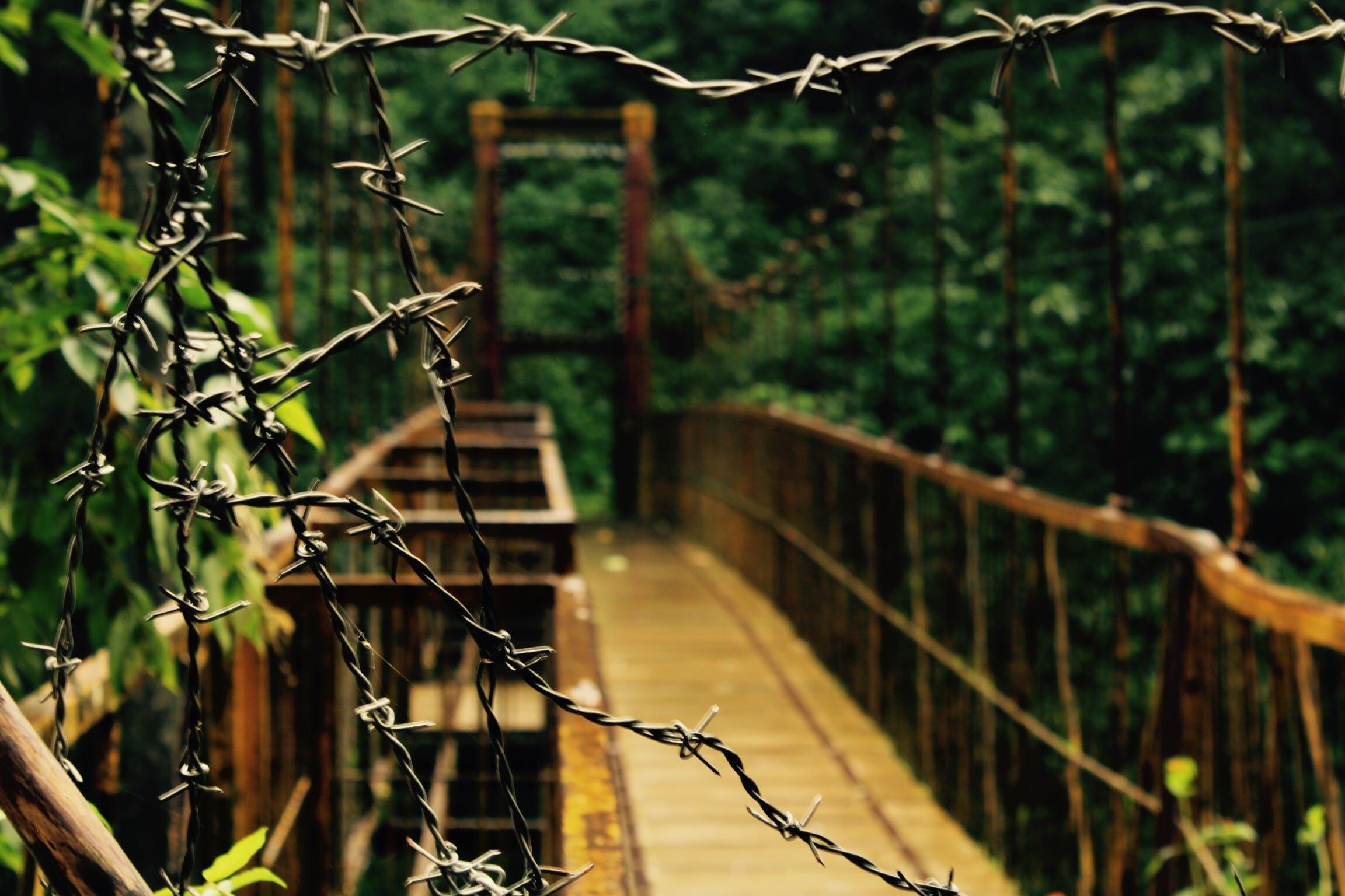 Free stock photo of bridge, Forest bridge, mother nature, nature