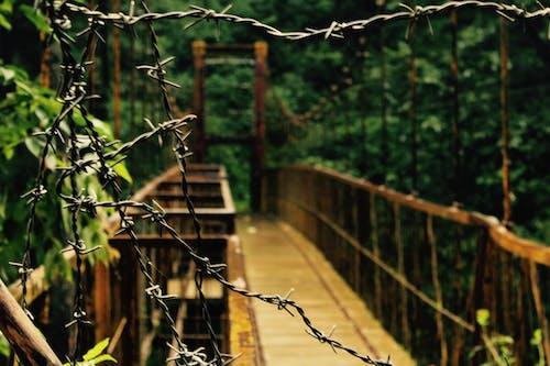 Fotobanka sbezplatnými fotkami na tému lesný most, most, príroda