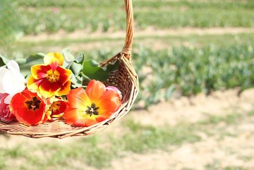 Assorted Flowers On Brown Wicker Basket