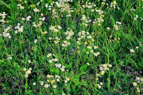 Imagine de stoc gratuită din floare, floră, flori, flori sălbatice