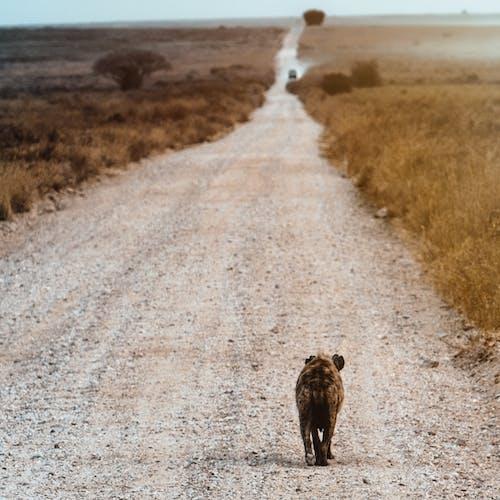 Foto stok gratis air, anjing, basah