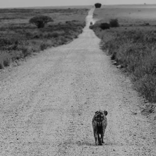 Foto stok gratis air, anjing, cairan