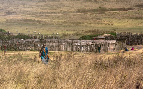 Foto stok gratis agrikultura, anak, bidang