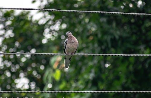 Brown Bird on Black Wire