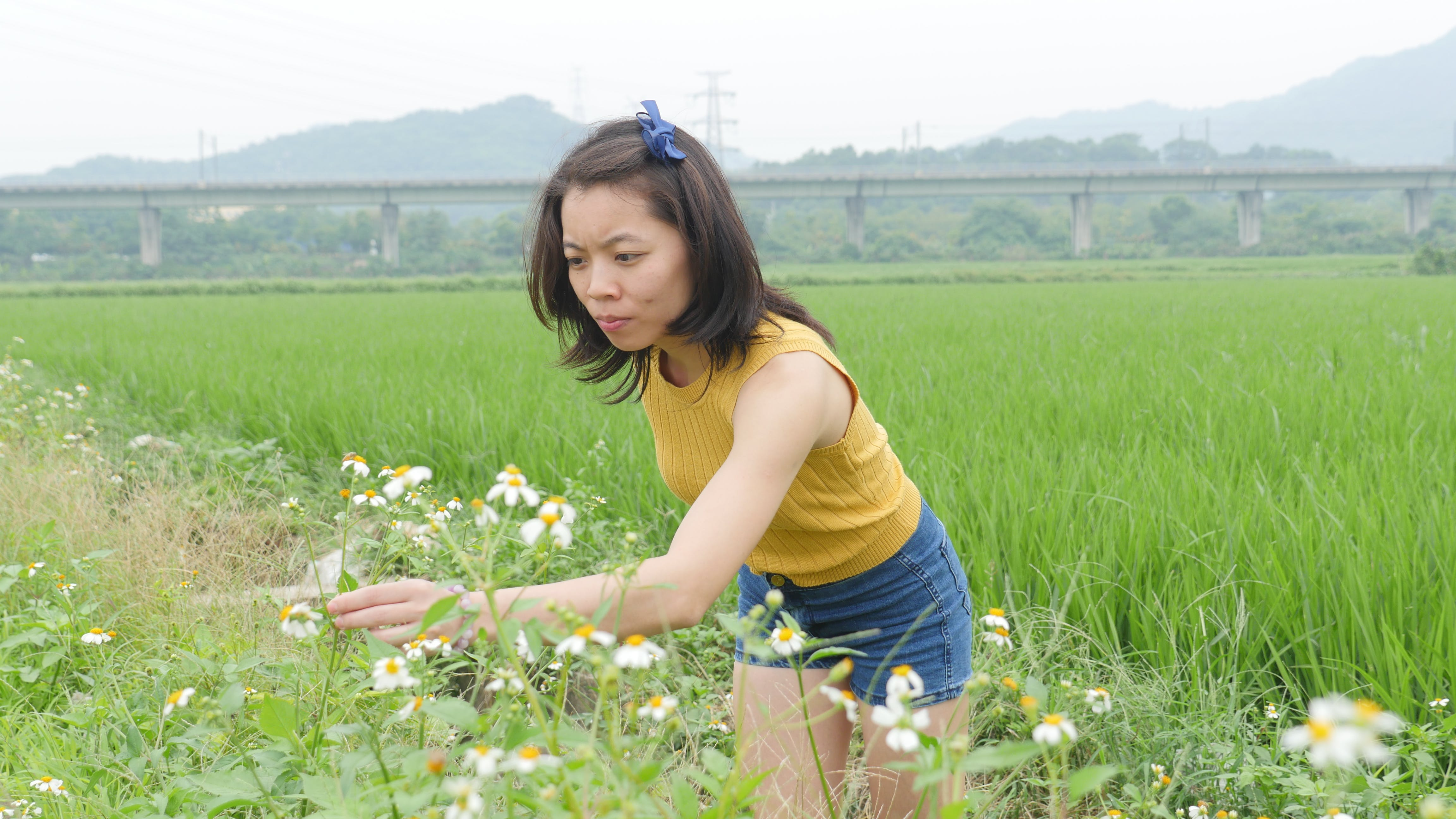 china, Chinese Girl in Rice Field, crops