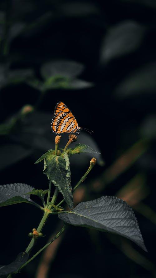 곤충, 꽃봉오리, 나뭇잎의 무료 스톡 사진