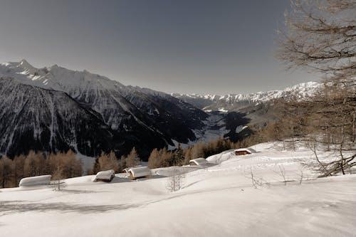 ICEE, 下雪的, 冬季, 冬季景觀 的 免費圖庫相片
