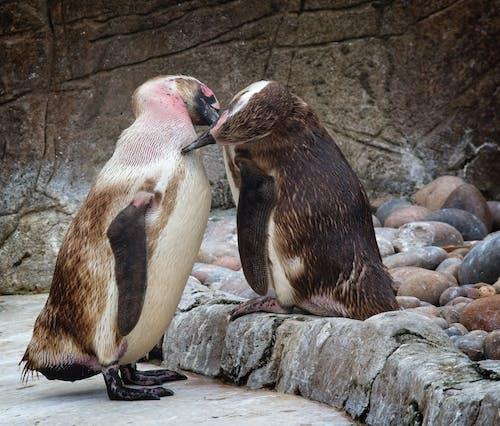 2 Penguins on Gray Rock