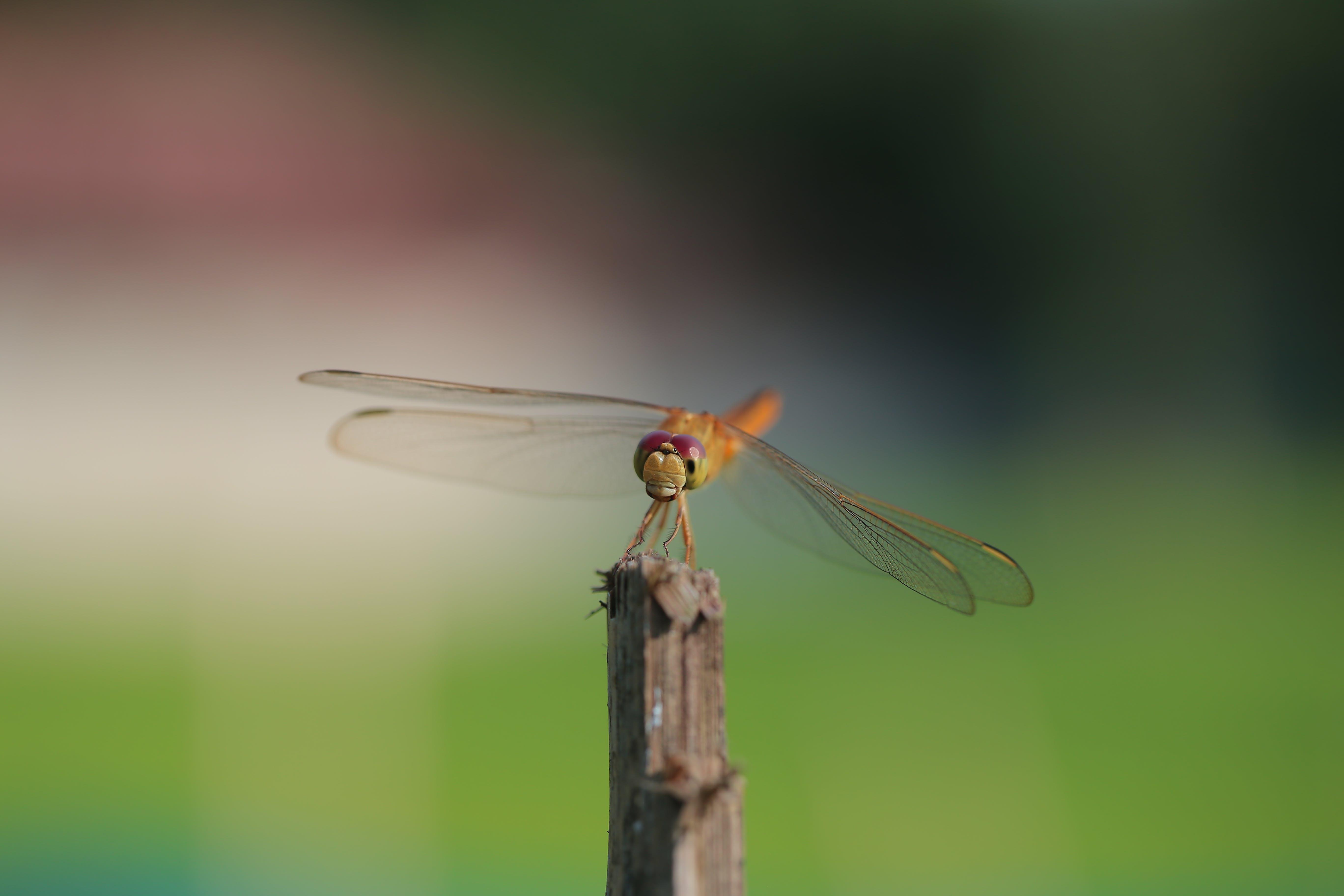 Kostenloses Stock Foto zu augen, biologie, entomologie, farben