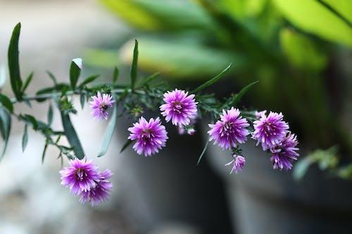 Foto stok gratis 100mm, bunga, canon, lensa