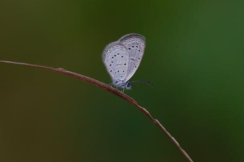 Foto stok gratis 6d, canon, eos, kupu-kupu