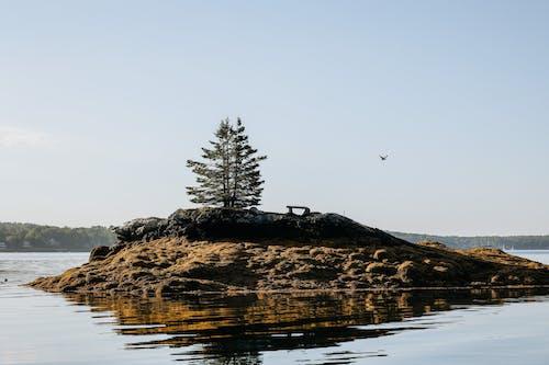 Immagine gratuita di acqua, alba, esterno