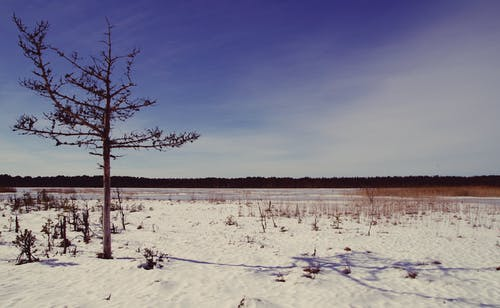 Darmowe zdjęcie z galerii z chmury, drzewo, dzień, gałęzie