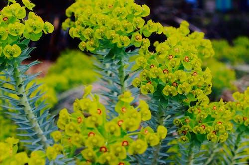 açık hava, alan, alan derinliği, Bahçe içeren Ücretsiz stok fotoğraf