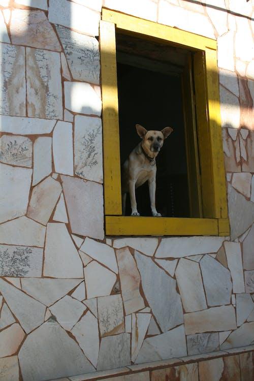 Ingyenes stockfotó ablak, ablakok, ajtó témában