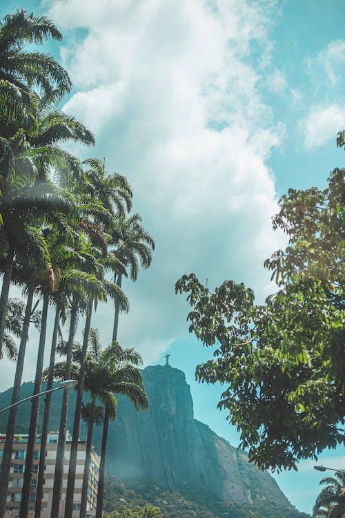 Ingyenes stockfotó egzotikus, fa, kókuszdió témában