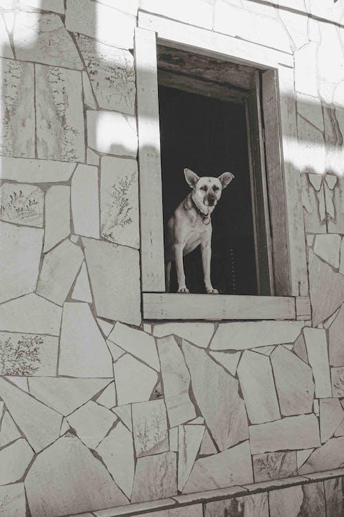 Ingyenes stockfotó ablakok, álló kép, Brazília témában