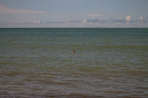 Základová fotografie zdarma na téma létání ptáků, moře