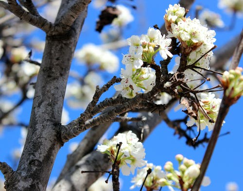 White Petaled Flowers on Tree